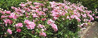 Garden Again 004