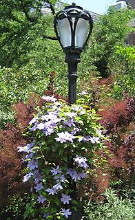 Garden Again 019