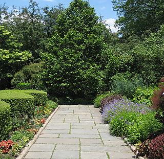 Garden Again 020
