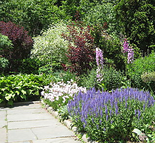 Garden Again 017