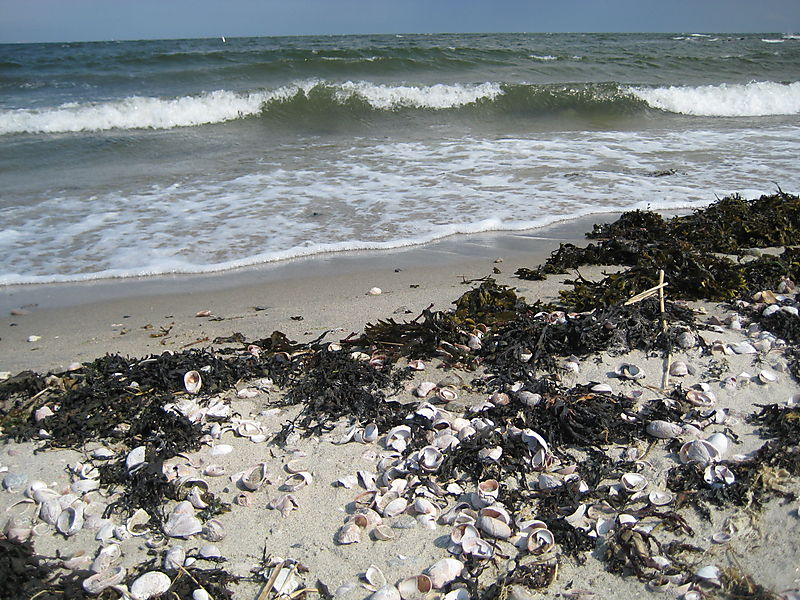 Compo Beach 021