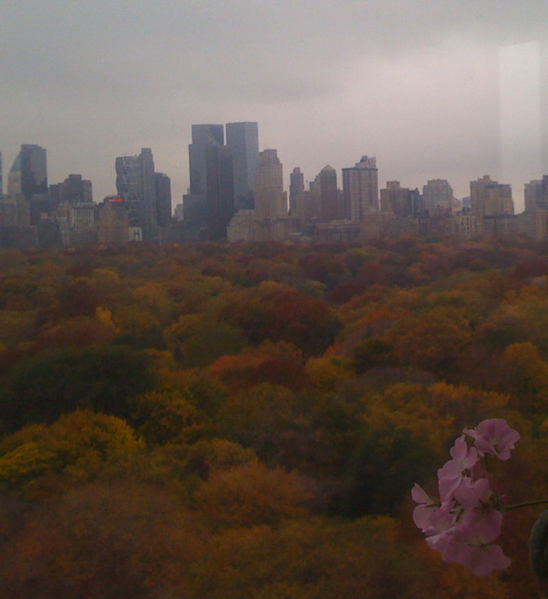 Central Park Fall Foliage 008