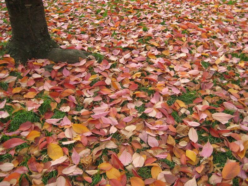 Fall Foliage 010