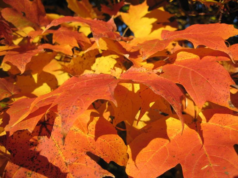 Fall Foliage 035