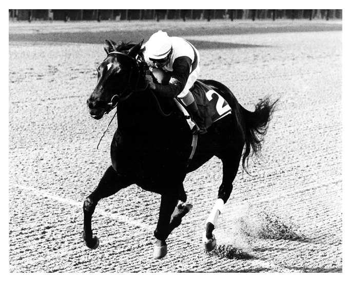 Ruffian Astoria BW Stretch May 10