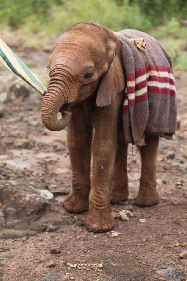 Frank Picchione: Elephants